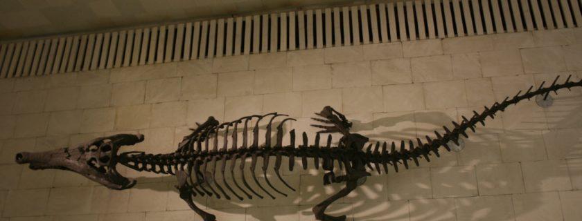 Les secondes au musée Paléontologique