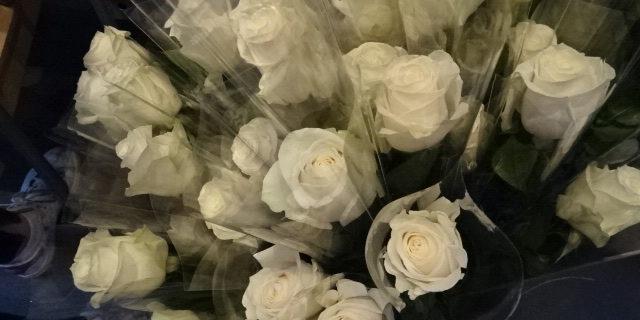 Un parfum de rose dans les couloirs du LFM