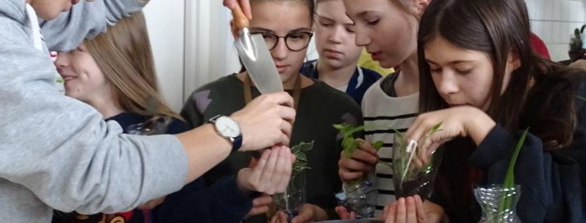 Semaine des langues… L'anglais … Planter ensemble